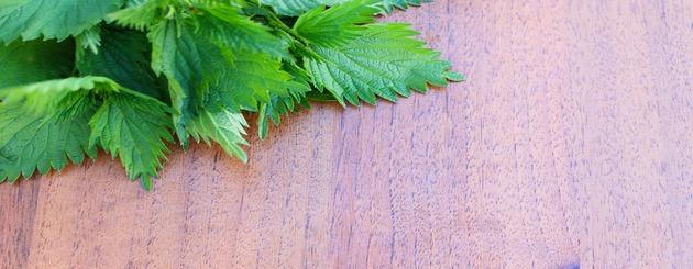 feuilles d orties sur table